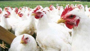 Uruguay también se blinda ante caso de gripe aviar en Chile