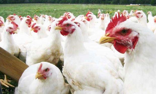 Se cerró frontera a la importación de carne, huevos y aves.