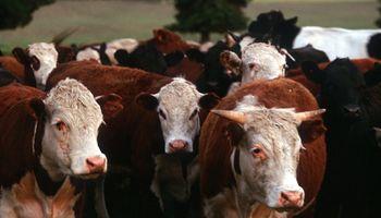 Carne bovina en Paraguay conquistó 18 nuevos mercados en el 2015