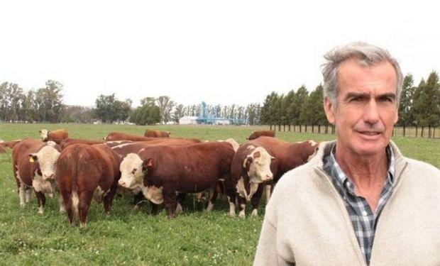 Horacio Esteves junto a un lote de toros. Al fondo, los silos de arroz.