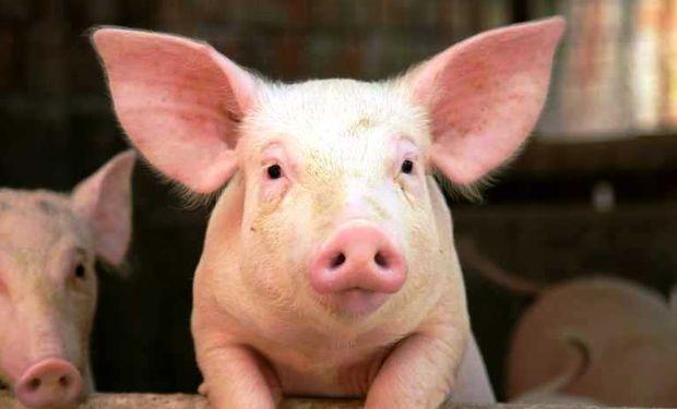 Carne de cerdo gana presencia en las carnicerías de Uruguay.