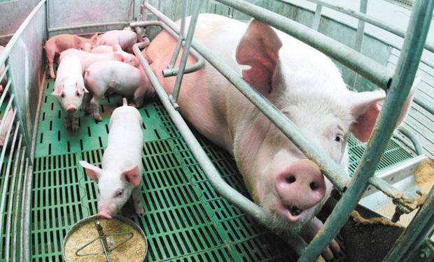 Comentarios de la Cámara de Productores Porcinos de Entre Ríos.
