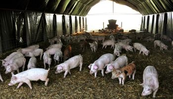 Por qué junio fue un mes histórico para la cadena porcina