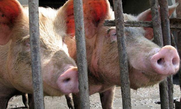 Carne vacuna, cerdo y frutas favorecerían a la UE.