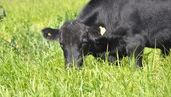 La carne de vaca cuesta caro al medio ambiente