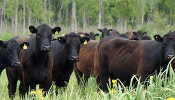 Carne: 45 entidades, cámaras, federaciones  y asociaciones rechazaron las acusaciones del Gobierno