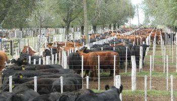 En la Patagonia reclaman la unificación del mercado de la carne