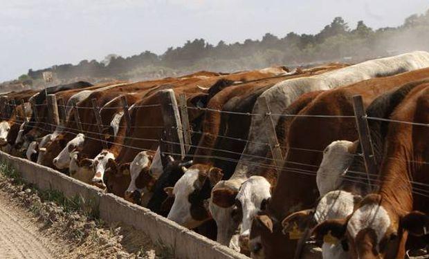 Expresiones de euforia comenzaron a inquietar a algunos ganaderos argentinos.