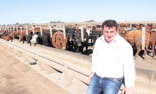 Néstor Tomasello, propietario del feedlot La Muñeca, junto a un lote de terneros en adaptación.