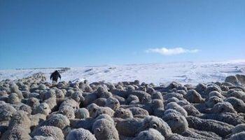 La Mesa Ovina Nacional pide medidas urgentes para los productores afectados por la crítica situación de la Patagonia