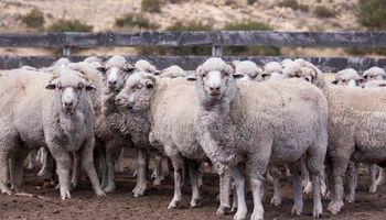 Control de la sarna ovina: entró en vigencia el nuevo marco regulatorio