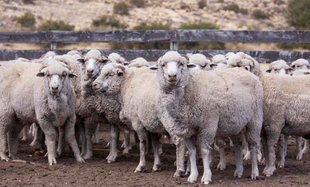 Control de la sarna ovina a nivel nacional.