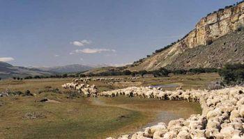 Lobby ganadero resiste la entrada de la carne argentina