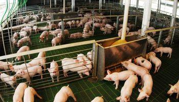 Producción de carne porcina creció un 7,59%