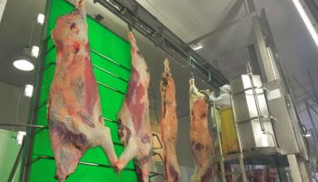 China capta la mitad de las carnes vacunas que exporta Uruguay