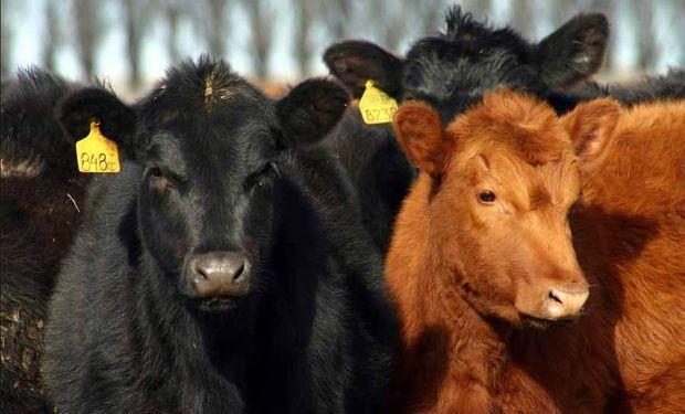 Venderán carne uruguaya por Internet en EE.UU.