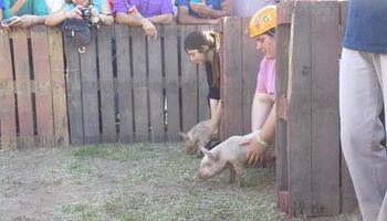 Insólita carrera de cerdos en Córdoba