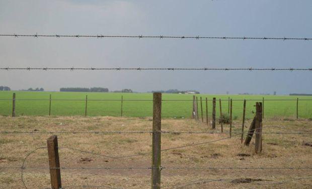 Un año con poco trigo, menos vacas y soja guardada en los silos
