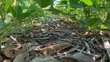 Carryover de herbicidas: consejos frente a un riesgo que se asocia a los años secos