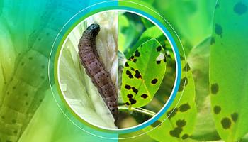 Lanzan herramienta para analizar la resistencia de plagas y enfermedades a insecticidas y fungicidas