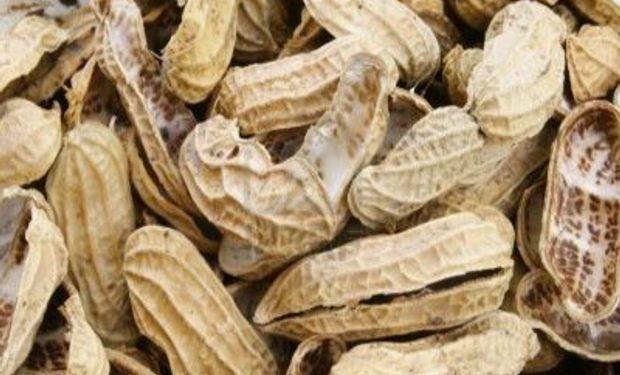 Córdoba es la meca de la producción de maní en la Argentina.