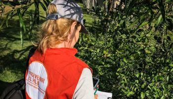 Corrientes: detectan plantas positivas al HLB
