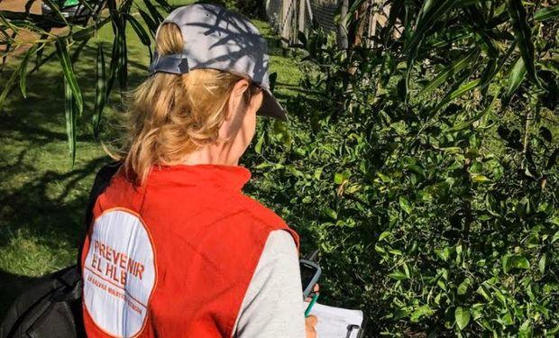 El Senasa detectó plantas positivas al HLB en el Norte de Corrientes.
