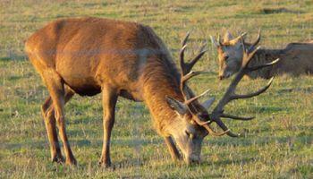 Buenos Aires: multas de hasta 1 millón 200 mil pesos por cazar ileagalmente