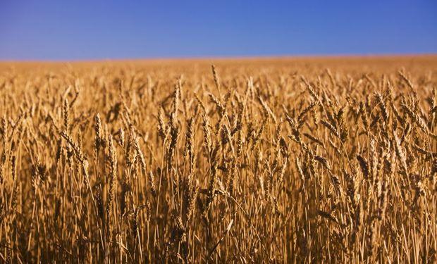 Los futuros de soja operan en alza por compras técnicas de oportunidad tras caer a niveles mínimos en 3 meses.