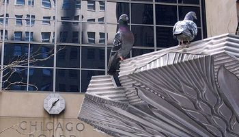 Chicago: maíz opera en alza por la amenaza de lluvia y retraso en la siembra