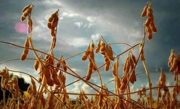 Gran día para el mercado de granos.