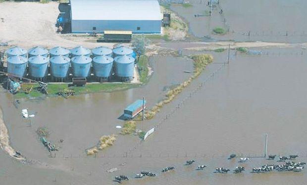 Hay muchos tamberos en situación desesperante, como consecuencia de las inundaciones.