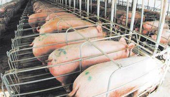Piden que se prohíba la importación de carne de cerdo de países con enfermedades