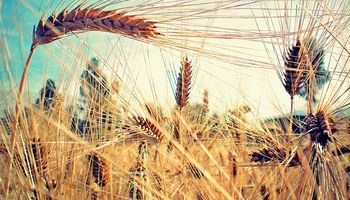 Un escenario alentador para el negocio de la cebada: claves para aprovecharlo