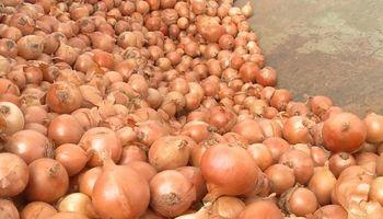 La cebolla goza de buena cosecha y espera buenos precios