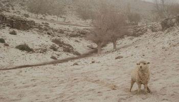Declaran la emergencia agropecuaria en Neuquén y Santiago del Estero
