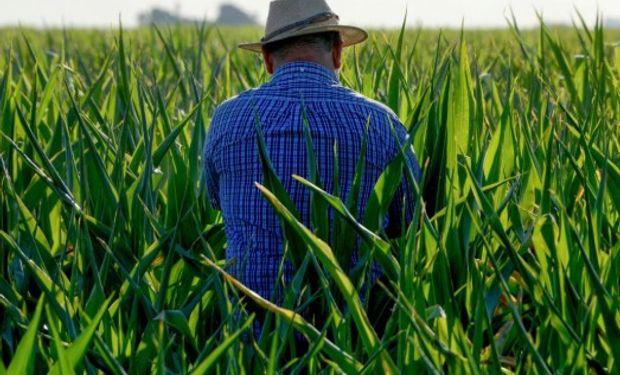Este año vuele el censo agropecuario.