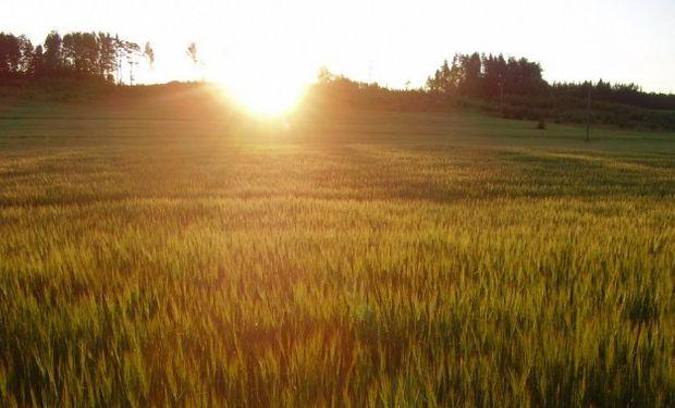 Productores quieren dar vuelta la hoja y ya piensan en el trigo.