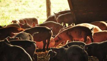 Rosporc: la plataforma de venta online comercializó 1800 animales y reflejó una gran demanda exportadora