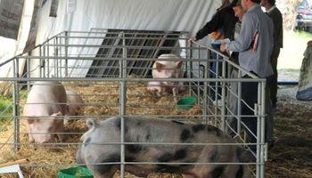 Producción porcina, por un camino asociativo