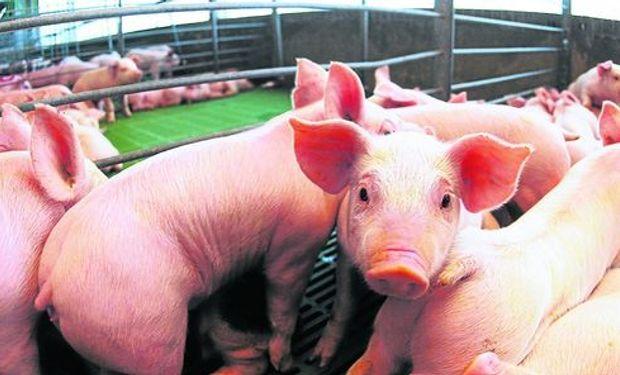 """""""Es vital trabajar en forma coordinada entre ambas cadenas, la vacuna y la porcina"""", dijo Tonelli."""