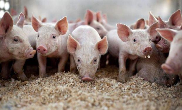 La producción de cerdos enfrentó un 2018 adverso.