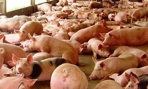 Kulfas señaló que se viene una década donde la producción y exportación de carne va a ser central