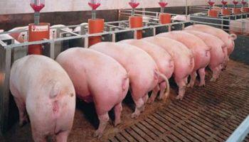 ¿Influye la localización de las granjas de cerdo en el saldo técnico del IVA?