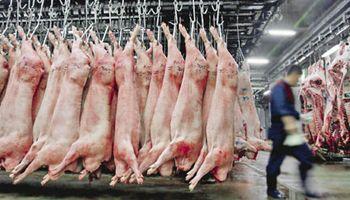 Producción nacional de cerdos se duplicó en la última década