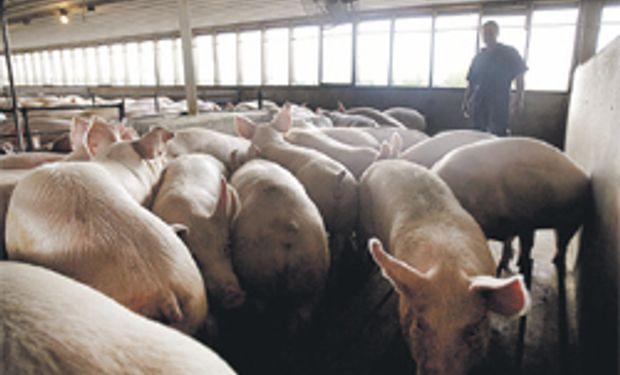 UE decide el ingreso de cerdos de EE.UU.