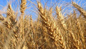 Cereales de invierno y el comienzo de una campaña recargada