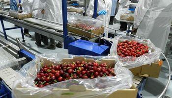Mendoza: abren la inscripción para exportar cerezas a China
