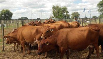 Chaco lanza un plan ganadero que busca aumentar en un 20% el stock