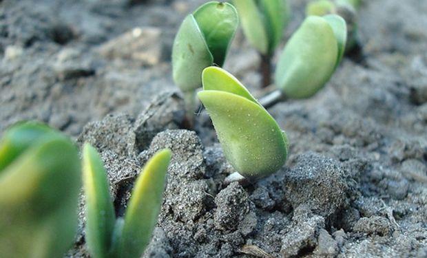 90% de la soja de primera está sembrada